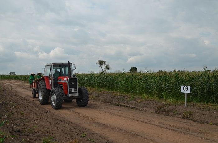 Xtreme Returns Farm maize-2