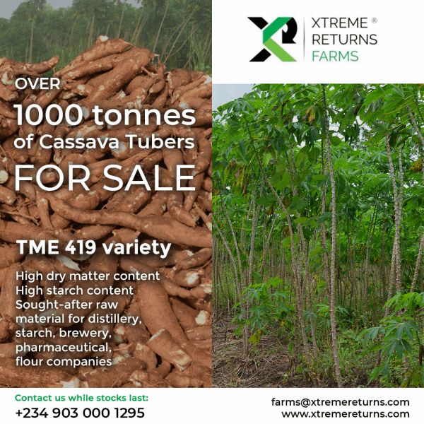 Xtreme-Farms- Tonnes of cassava tubers for sale