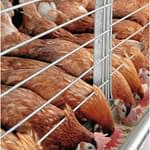 poultry farming at xtreme returns farms