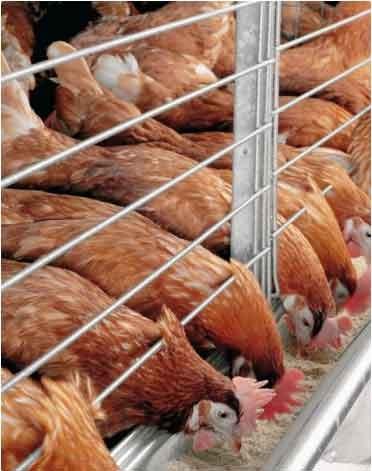 poultry farming at xtreme returns farms