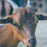What You Must Know Before Starting That Goat Farm