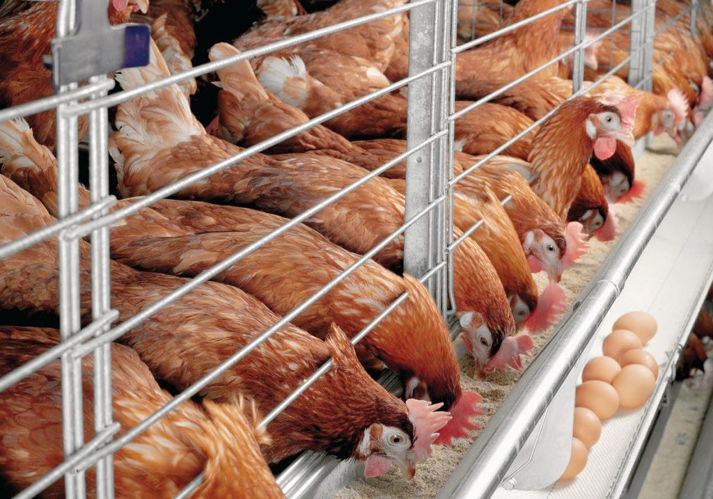 Xtreme Return poultry-farming1-1024x717