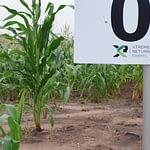 Factors To Consider When Buying Farmland In Nigeria