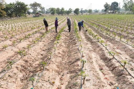 Irrigation at Xtreme Returms Farms
