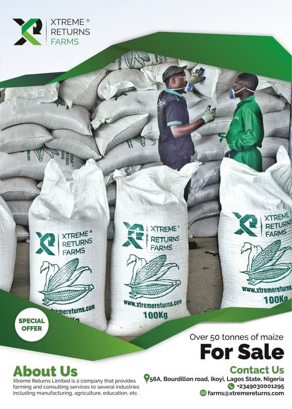 Xtreme-Returns-Maize-for-sale
